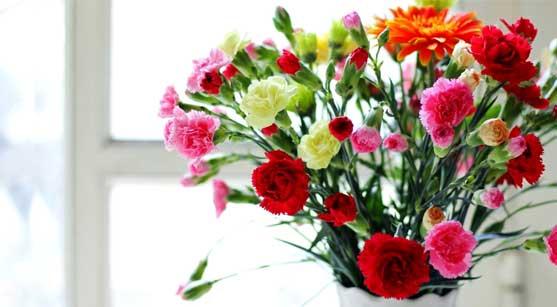27_carnation