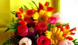 Perfect beauty & my childhood love; tulips