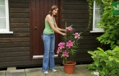 Effective guidelines to Grow Lilies and taking care of the plant